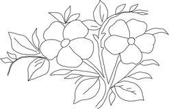 Violaceae Stock Illustrations.