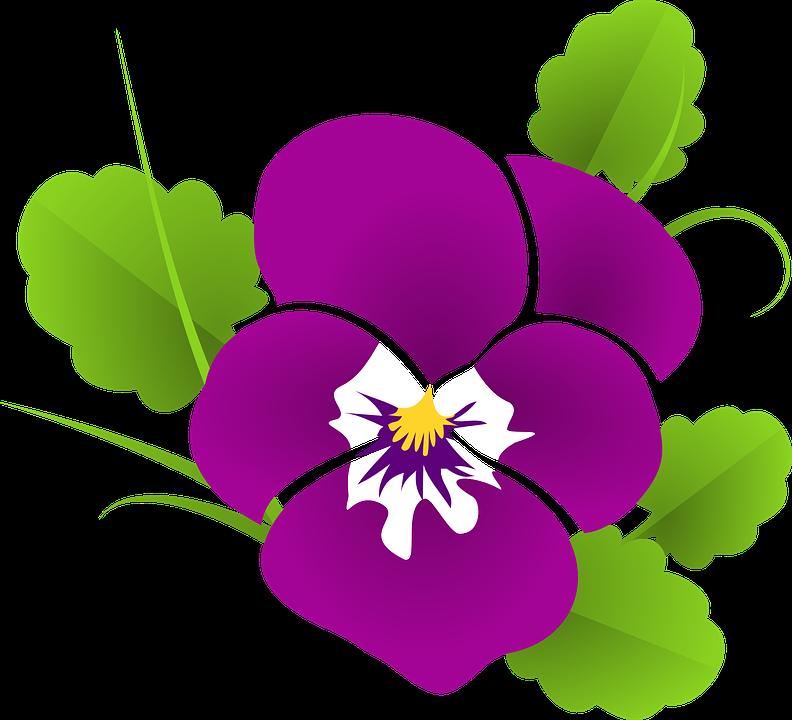 Free vector graphic: Pansy, Violet, Viola, Violaceae.