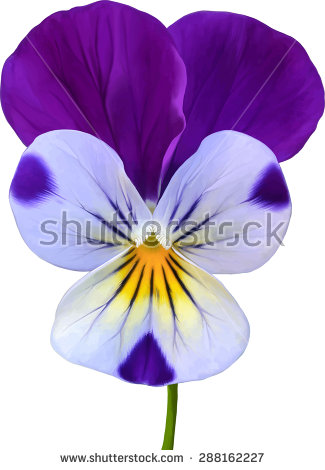 Violaceae Stock Vectors & Vector Clip Art.