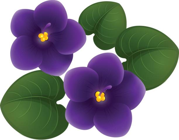 Violet Flower Clipart at GetDrawings.com.