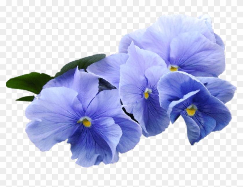 Free Png Download Blue Violet Flower Png Images Background.