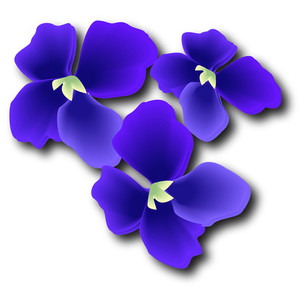 Pansies, Violets, Lilacs & Purple Flowers.