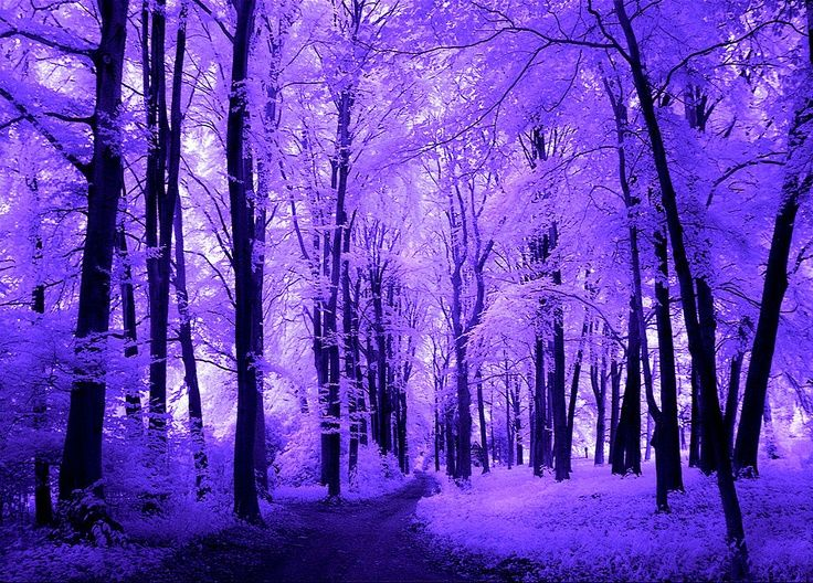 1000+ images about Snowscapes and Winter Fairylands on Pinterest.
