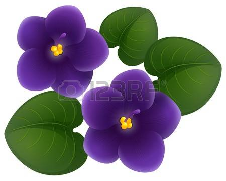 470 African Violet Stock Vector Illustration And Royalty Free.