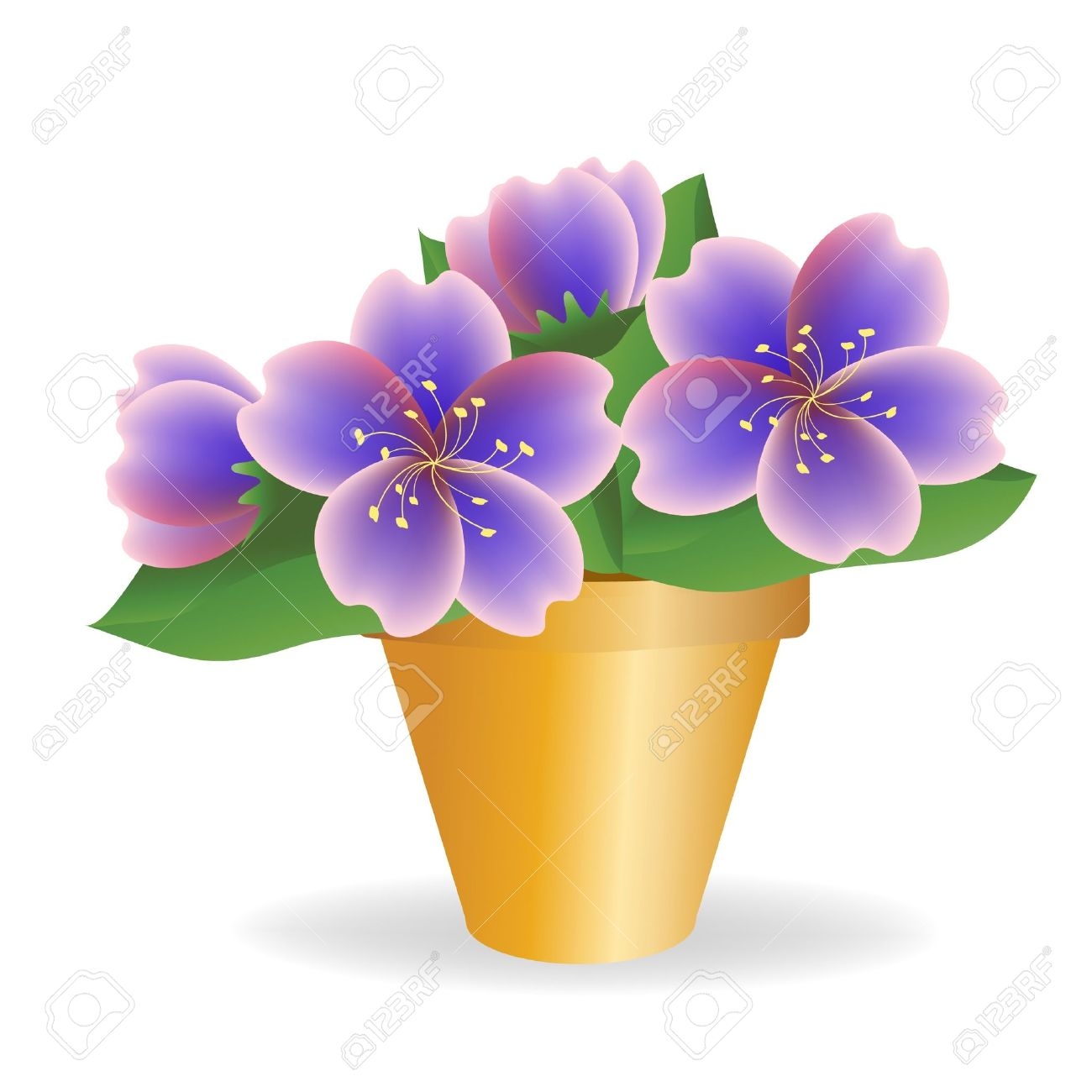 Violet. House Plant. Royalty Free Cliparts, Vectors, And Stock.