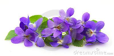 Clipart violets flowers.