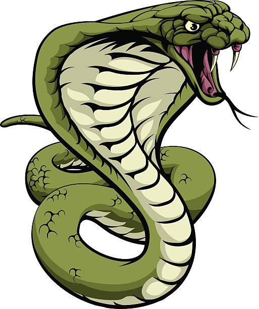Best Viper Snake Illustrations, Royalty.