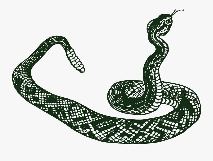 Snake Clipart Viper Snake.