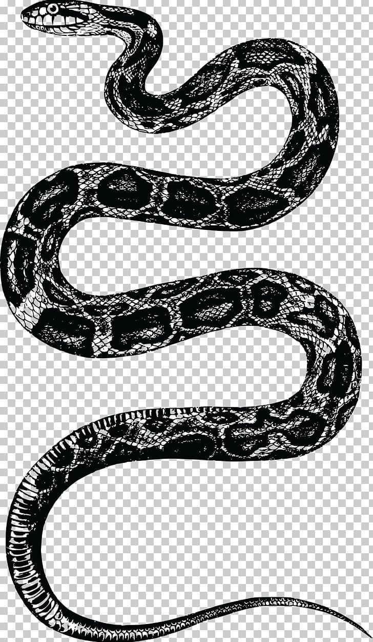 Corn Snake Rattlesnake PNG, Clipart, Animals, Black And.