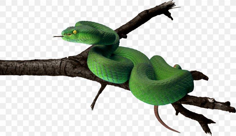 Snakes Smooth Green Snake Clip Art LA Culebra Verde, PNG.