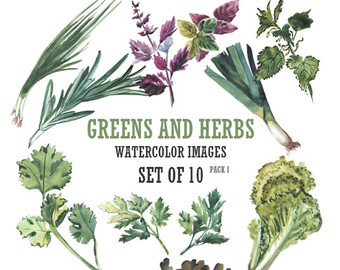 Herbs illustration.