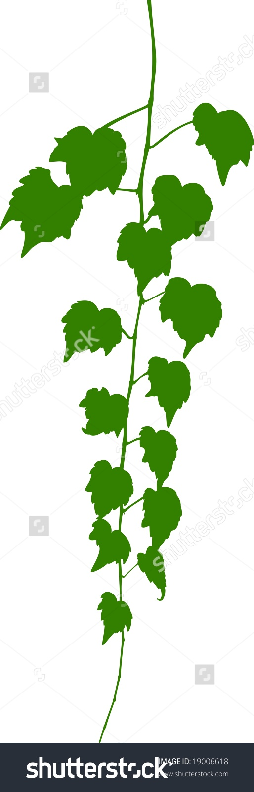 Green Virginia Creeper Vector Stock Vector 19006618.
