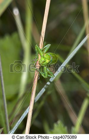 Stock Photographs of great green bush.