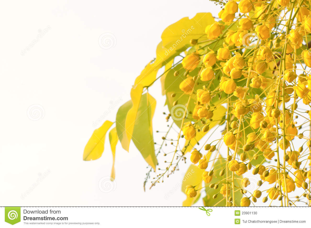 Vishu Stock Photos, Images, & Pictures.