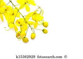 Vishu Images and Stock Photos. 202 vishu photography and royalty.