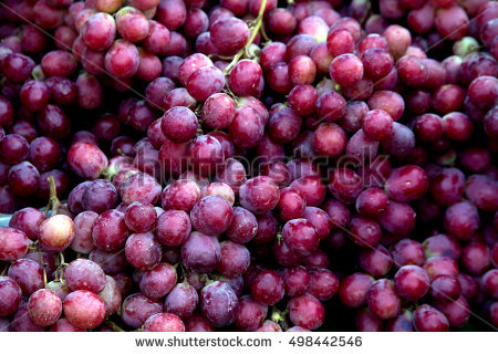 Vitaceae Stock Photos, Royalty.
