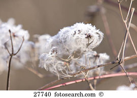 Seed heads Stock Photo Images. 13,634 seed heads royalty free.