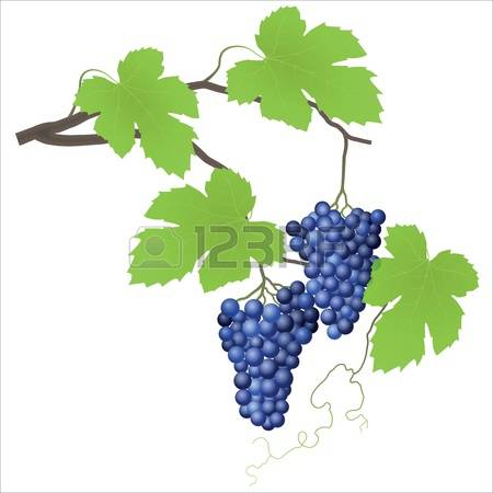 100 Vitis Stock Illustrations, Cliparts And Royalty Free Vitis Vectors.