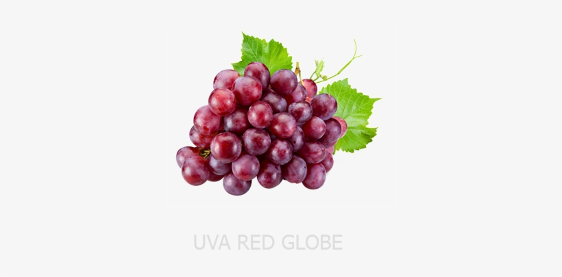 Vitis Vinifera Seed Extract Transparent PNG.