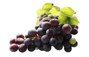 Vitis vinifera png » PNG Image.