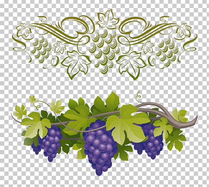 Common Grape Vine Vitis Amurensis PNG, Clipart, Branch, Common Grape.