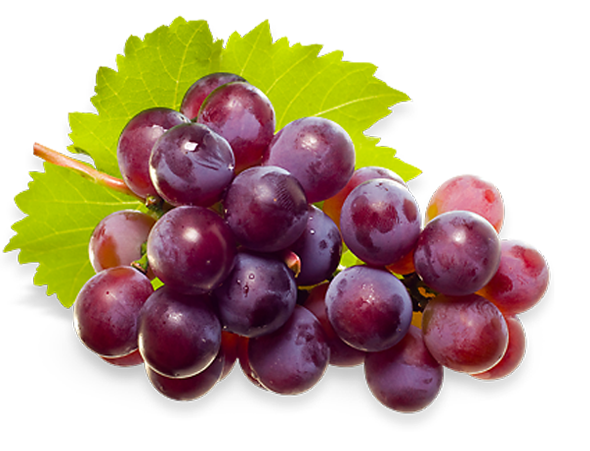 Vitis vinifera png 5 » PNG Image.