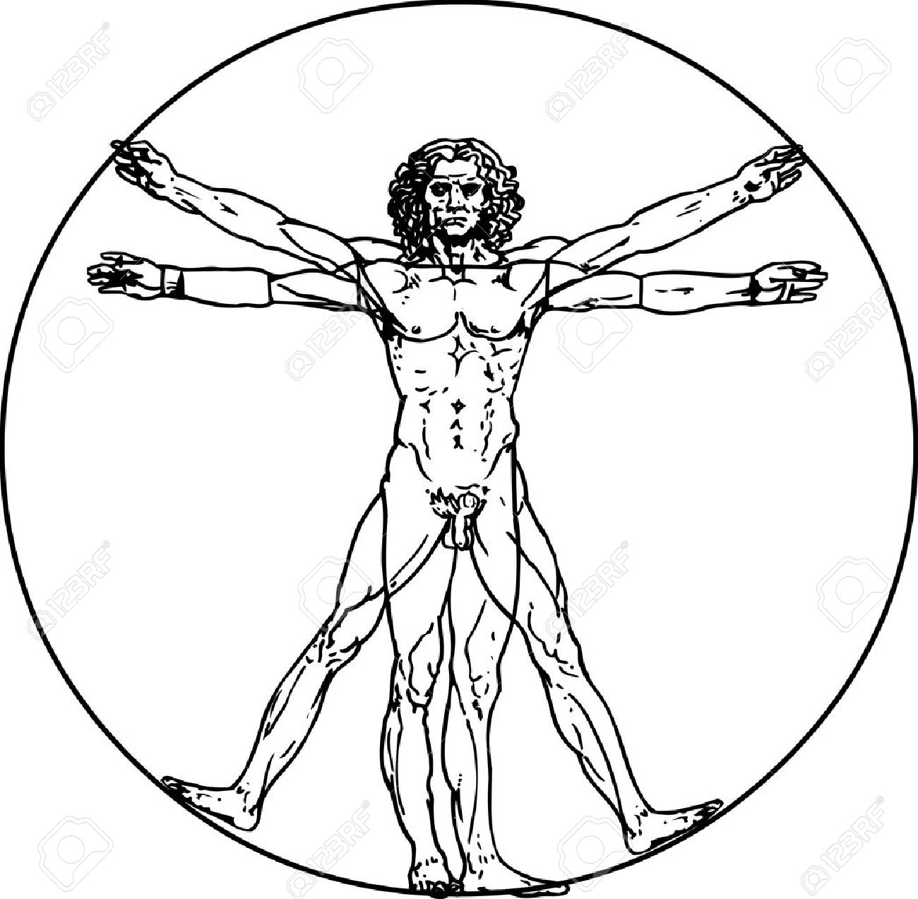 Leonardo Da Vinci's Vitruvian Man In Vector Royalty Free Cliparts.