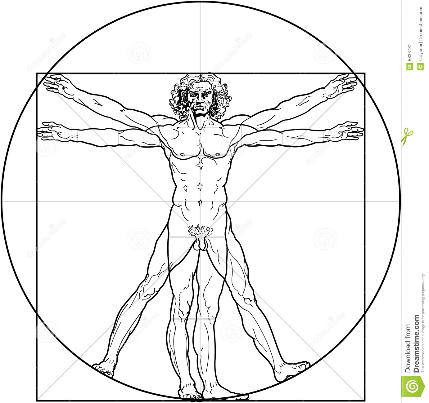 Vitruvian man and woman clipart.