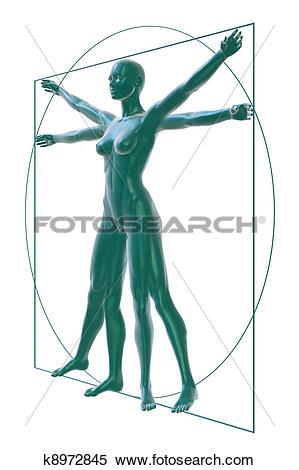Stock Illustration of Vitruvian woman perspective.