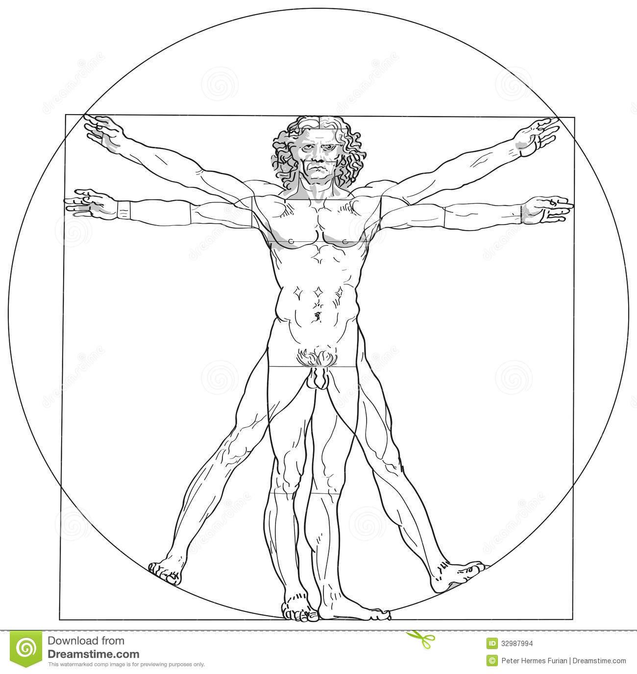 Vitruvian Stock Illustrations.