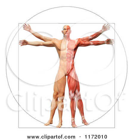 Clipart of a 3d Vitruvian Man with Exposed Muscles on One Side and.