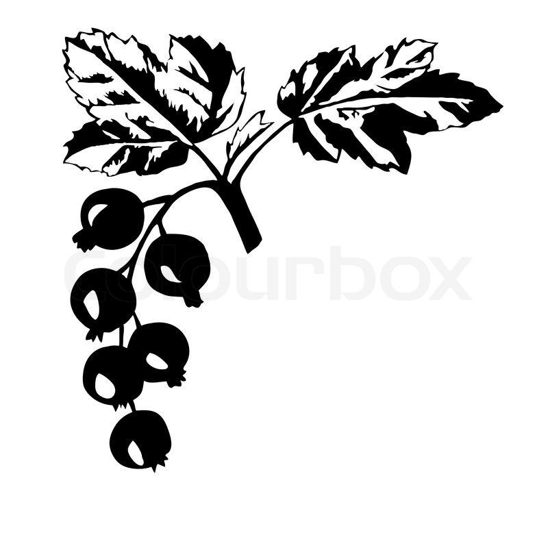 Vektor Silhouette des schwarzen Johannisbeeren auf weißem.
