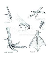 Vögel Füße Illustrationen stock.