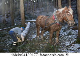 Horse logging Stock Photo Images. 34 horse logging royalty free.
