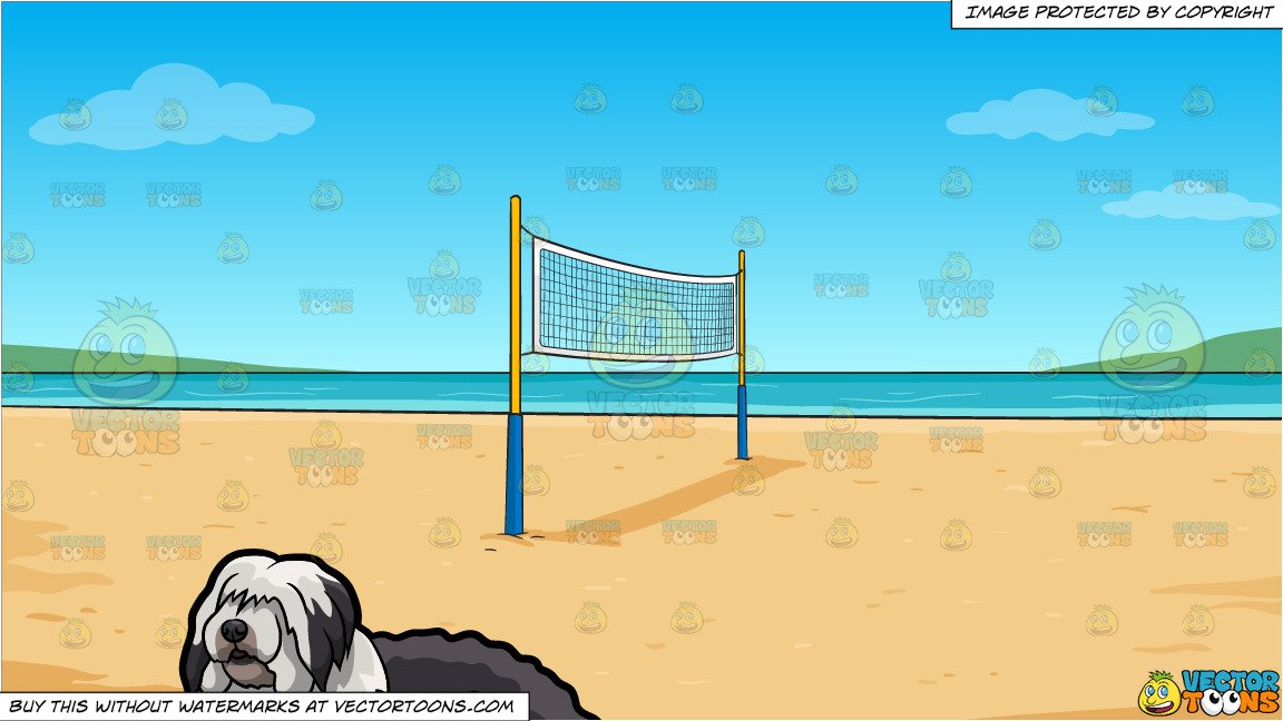 An Old English Sheepdog Taking A Break and Beach Volleyball Background.