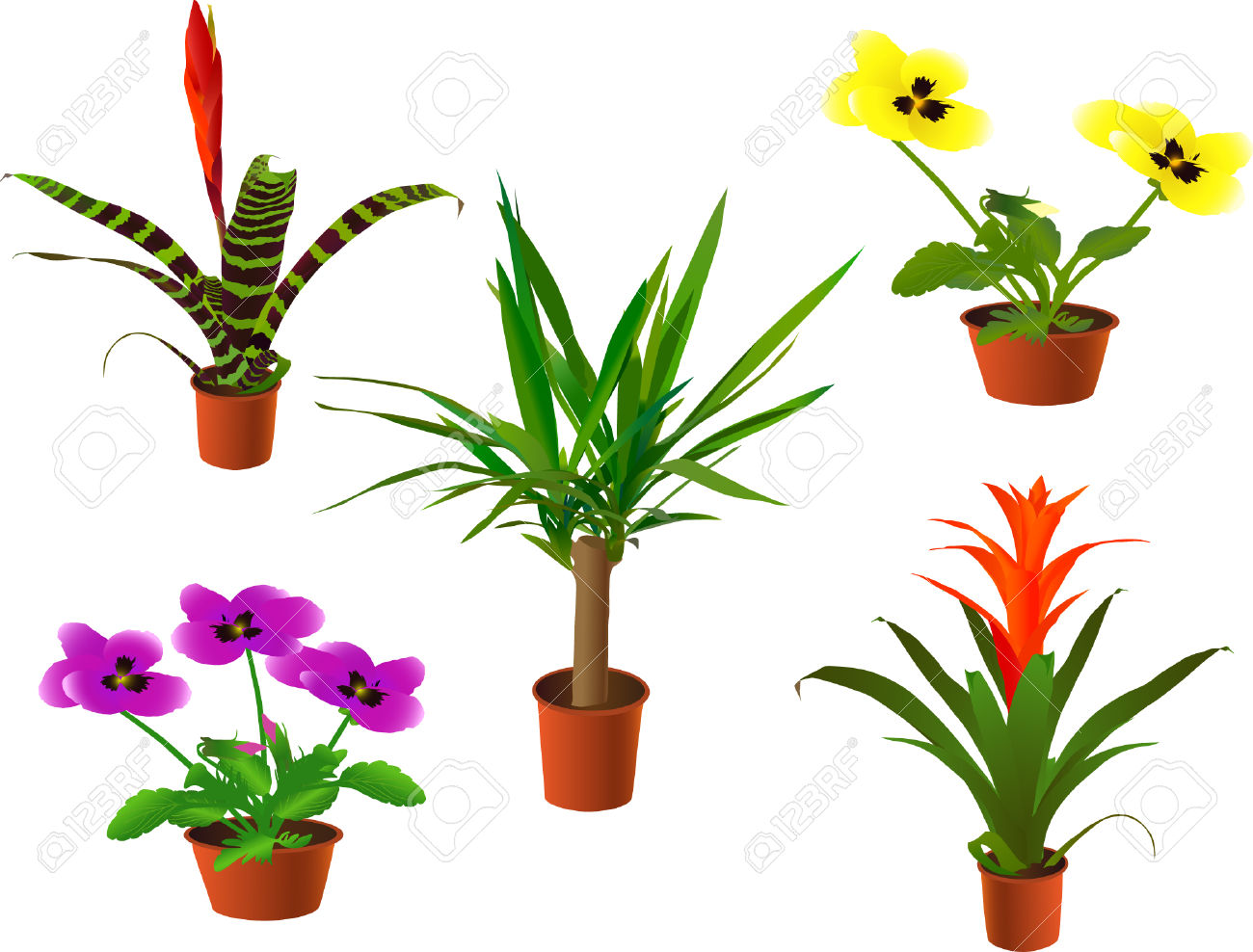 Window Plants Collection (vector Illustration) Royalty Free.