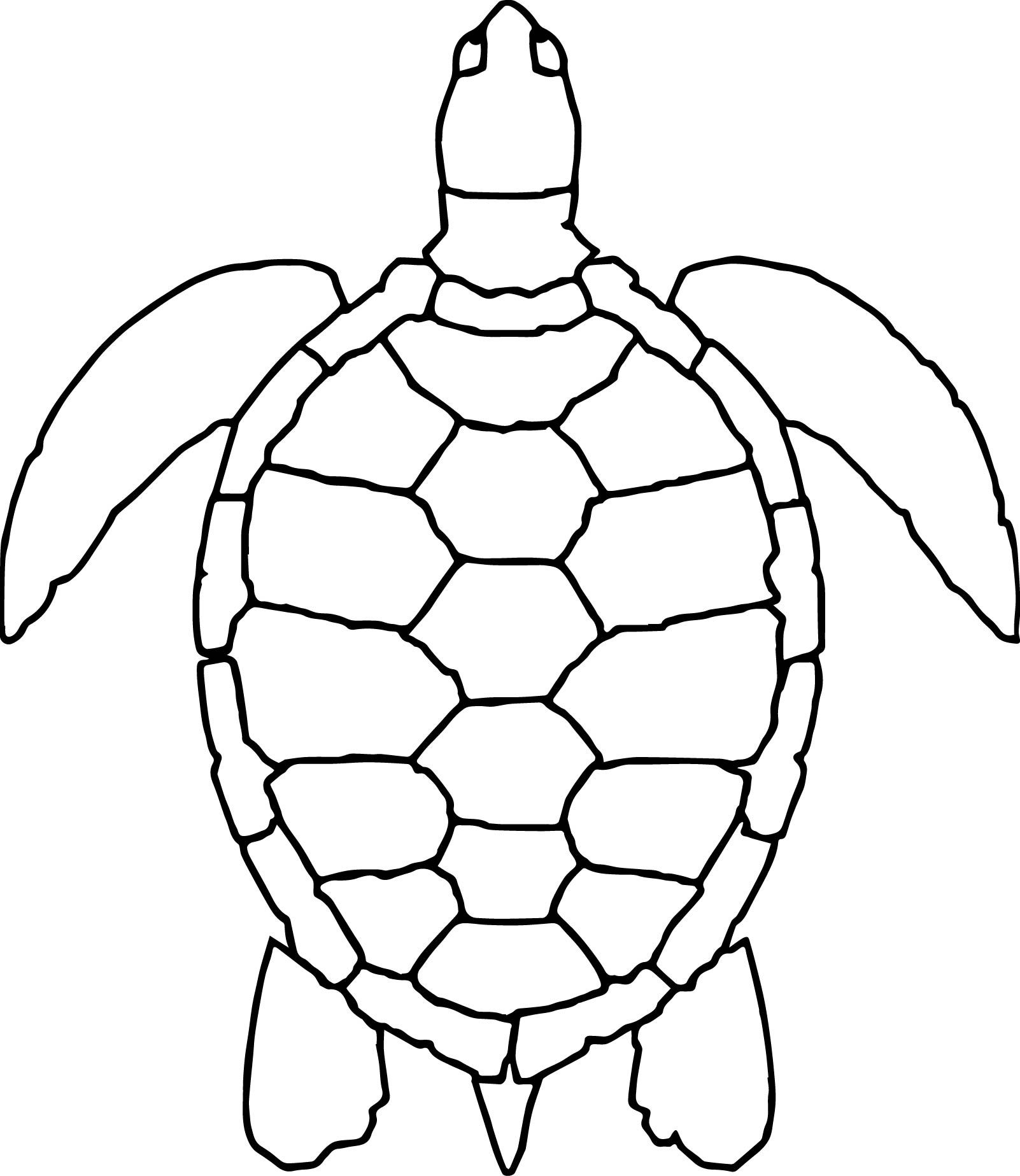 awesome Sea Animals Turtle Coloring Page.