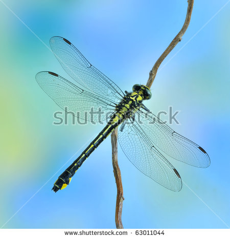 Dragonfly Wings Stock Photos, Royalty.