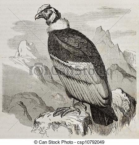 Drawing of Condor.