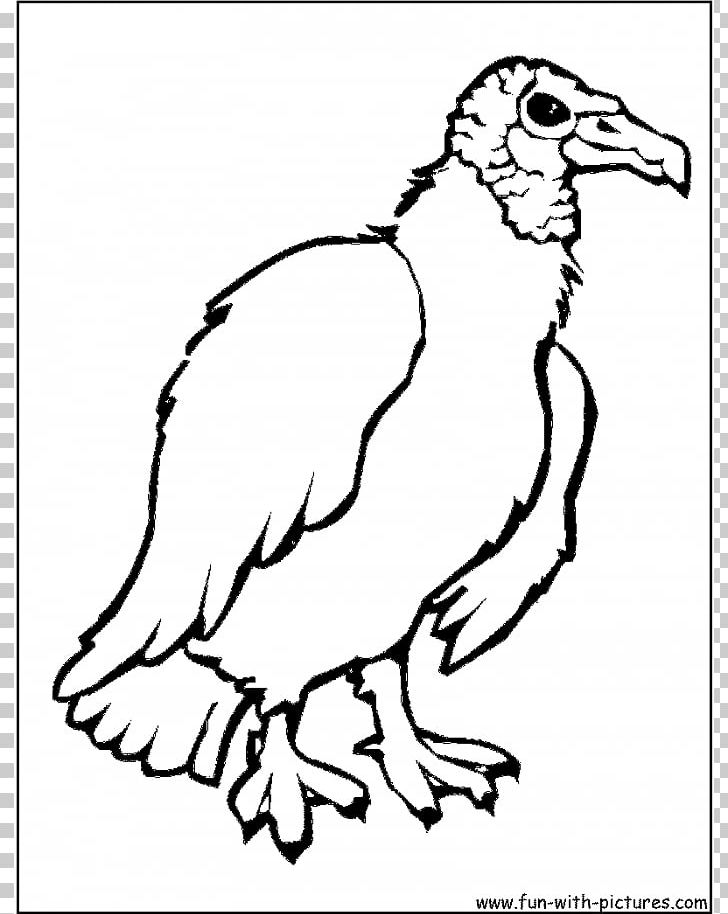 Turkey Vulture Bird Coloring Book Drawing PNG, Clipart, Art.