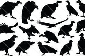 Vulture Silhouette Vector Graphics.