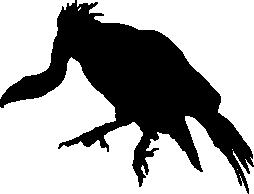 Vulture Silhouette.