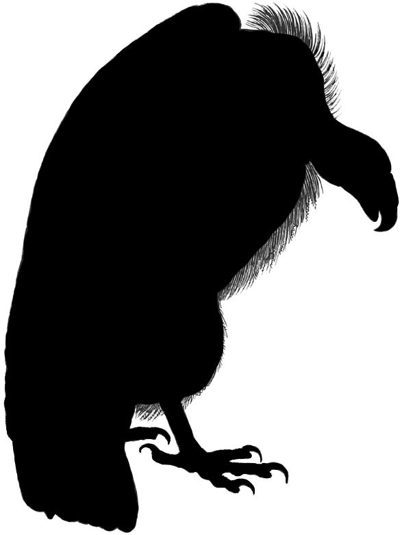 silhouette vulture.