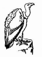 Free Vultures Clipart.