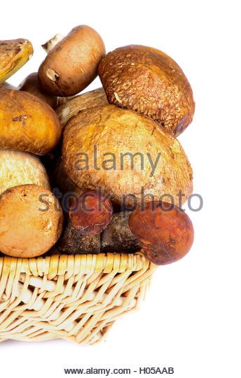Peppery Bolete Stock Photos & Peppery Bolete Stock Images.