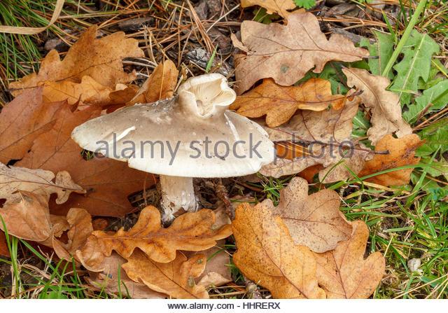 Fungi Fungus Stock Photos & Fungi Fungus Stock Images.