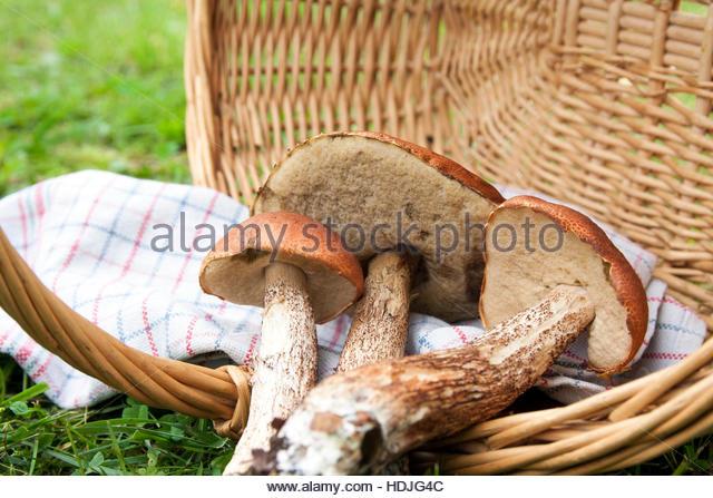 Boletus Fungi Stock Photos & Boletus Fungi Stock Images.