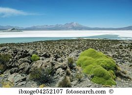 Yareta Stock Photo Images. 28 yareta royalty free images and.