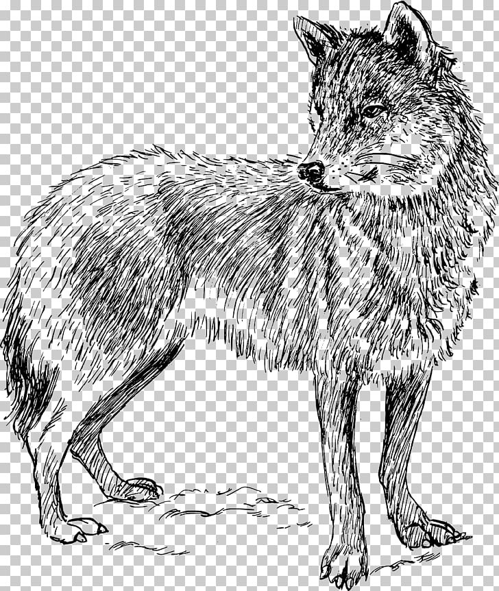 Arctic wolf Coyote Iberian wolf Wolf Walking , Wolf PNG.