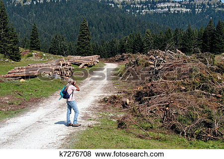 Pictures of Wood Logs k7276708.